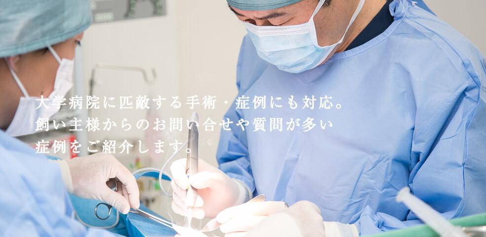 大学病院に匹敵する手術・症例にも対応。飼い主様からお問い合せや質問が多い症例の手術写真を紹介します。