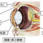進行性網膜萎縮