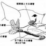 唾液腺嚢腫