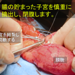 子宮蓄膿症3