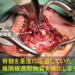 椎間板ヘルニア整復3