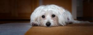 dog-1158957_640
