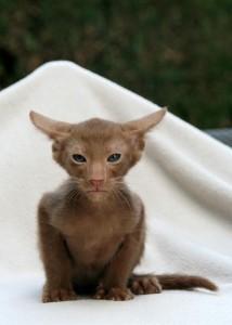 cat-408802_640